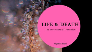 Life & Death - The Processors of Transition