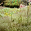 Thumbnail: Spring Blooms Tablescape