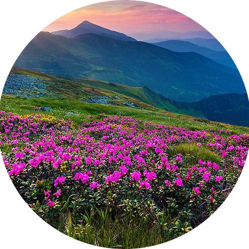 Planinsko cveće