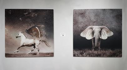«Companions» & «Pterophant»