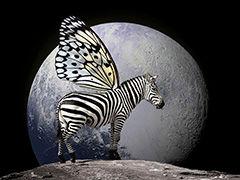 Cebrasus.jpg