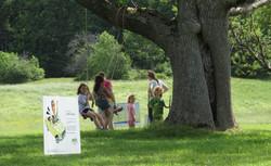 Tree swing at story walk