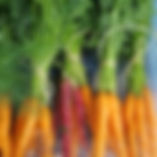 sealyon carrots.jpg