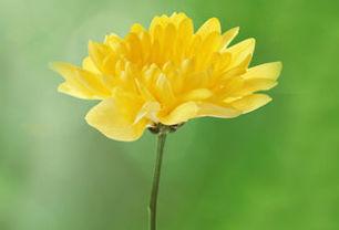 FlowerPremium.jpg