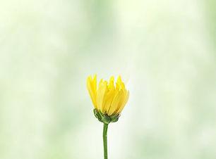 FlowerBasic.jpg