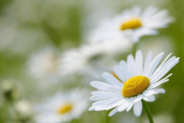 flowers-5128200_1920.jpg