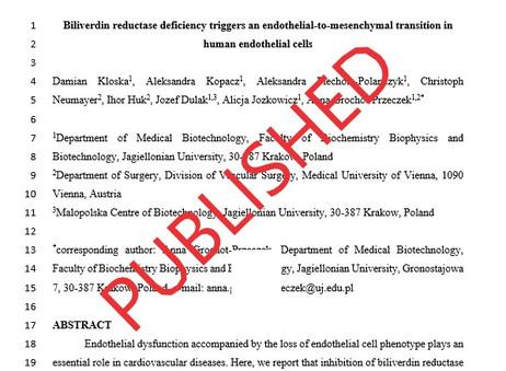 BVR maintains endothelial phenotype