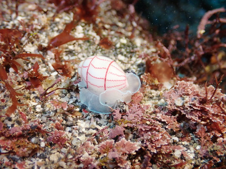 深海のアイツが登場❕