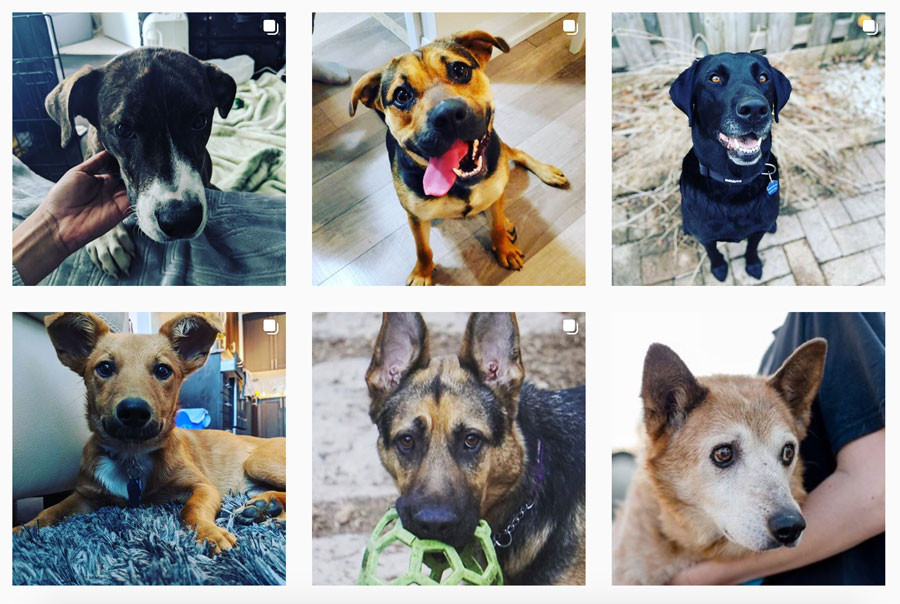 dogs that need to be adopted