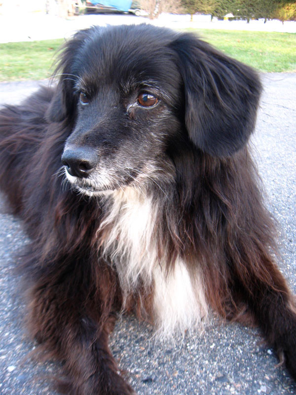 our dog mitzi