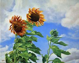 Wind-Blown Sunflowers