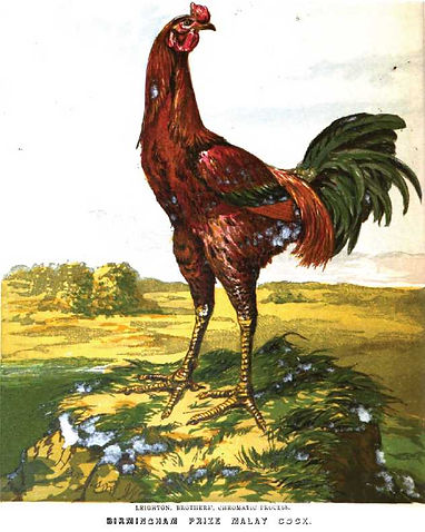 Malay-Chicken.jpg
