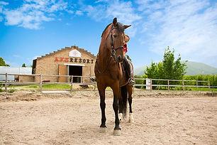 horsepic.jpg