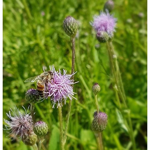Manitoba Wild Flower Honey