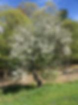 CIYO NH Spring 2020.jpg