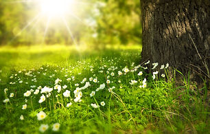spring-tree-flowers-meadow-60006 (1).jpe