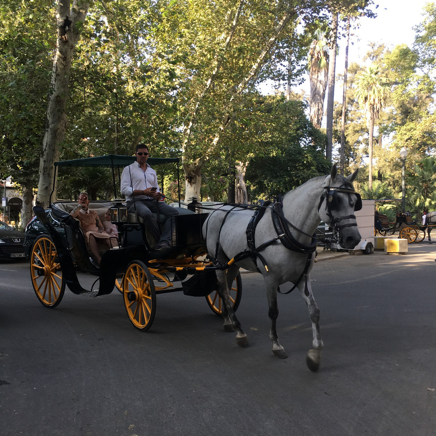 Carriage ride in seville!