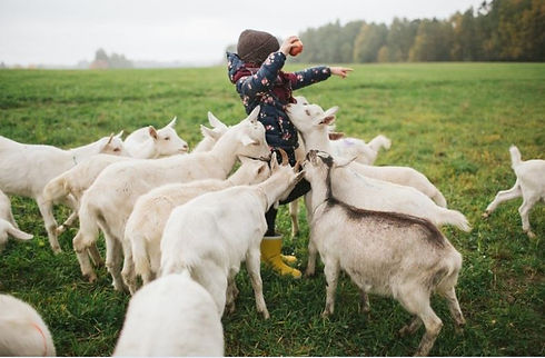 Hands-On Farm Tours for Children at GROW Sustainable Learning Centre Toms Creek
