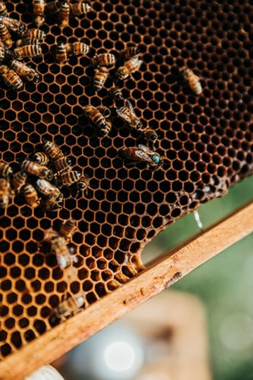 Learn Beekeeping at GROW Sustainable Living Toms Creek