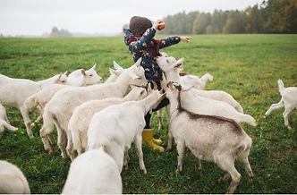 GROW Sustainable Living Mini Mountain Goat Tours Toms Creek Australia
