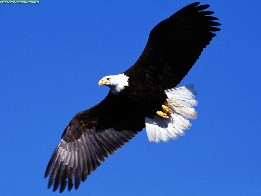 La historia de la renovación del águila.