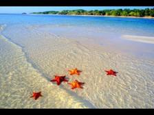 El niño y la estrella de mar