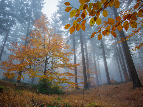 Podzimní Broumovsko