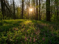 Libický luh na jaře