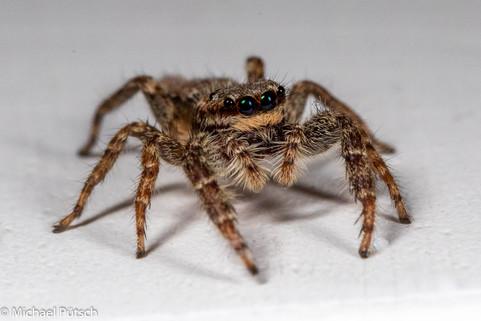 Kleine Spinne_MGL2931.jpg