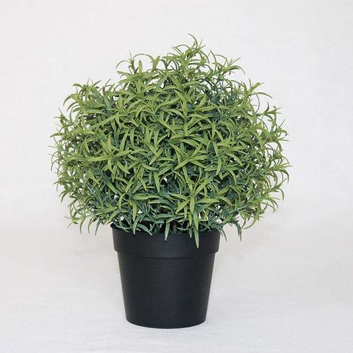 Pflanze klein