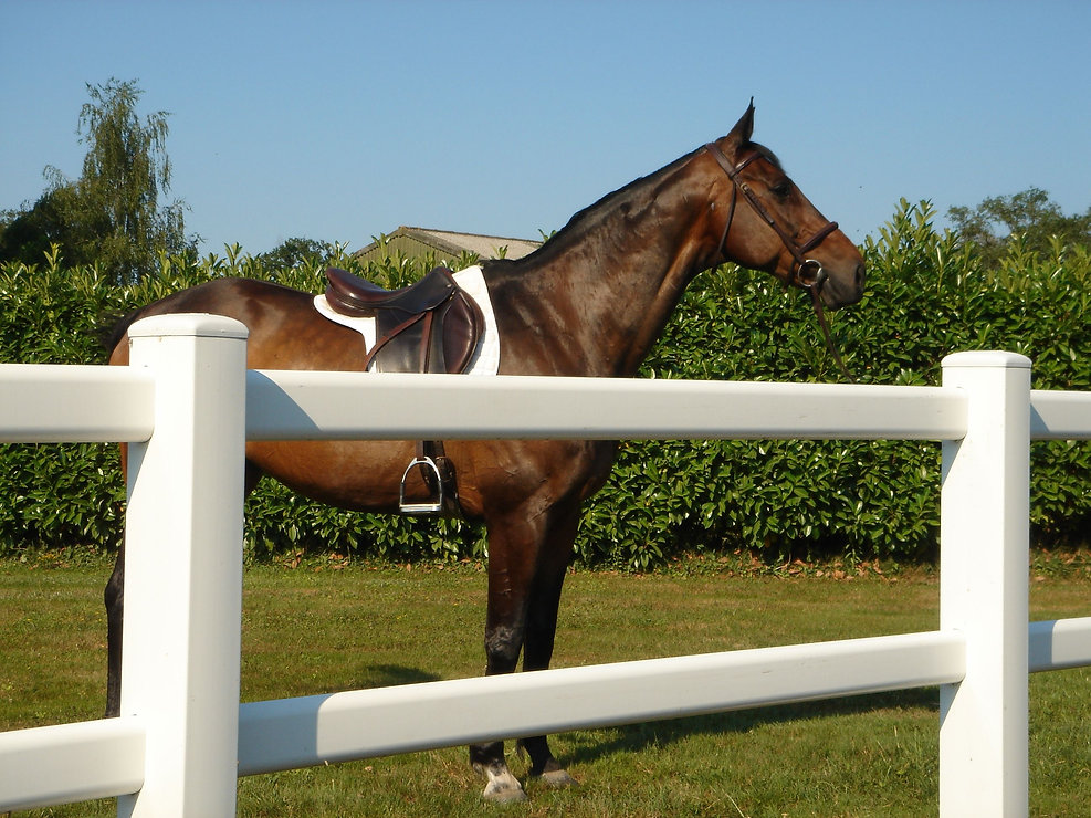 Swap Equestrian Photo.jpeg