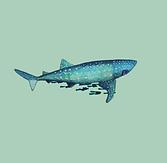 0224_ElyGerman_Whale_Color.png