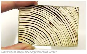 Прозрачное дерево: новый материал с уникальными свойствами