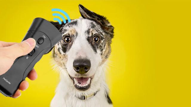 Стоп-лай для собак