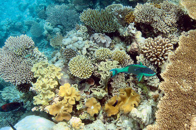 Технологии 3D печати помогут обитателям коралловых рифов