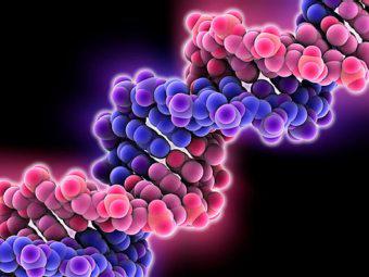 Новый метод генной терапии позволит бороться с раком