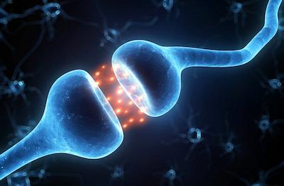 Новое устройство функционирует подобно синапсам между нейронами