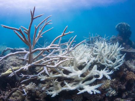 Ученые бьют тревогу: к 2100 году могут погибнуть все обитатели коралловых рифов