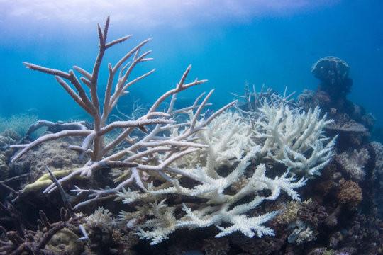 Выбеленные коралловые рифы