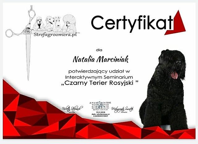 Czarny terrier rosyjski