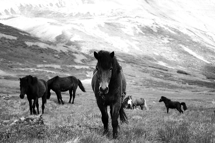 A%20group%20of%20horses%20on%20a%20mountain%20pasture_edited.jpg