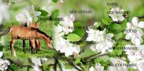 NW Shakir Samir pedigree
