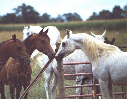 SWA Ansair and mares