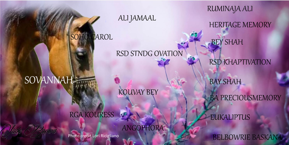 Sovannah pedigree