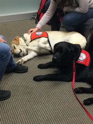 Students take a well-deserved break from studying with some dog therapy