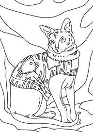 Sphynx cat in clothes