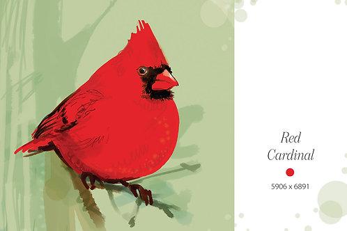 Red Cardinal - bird illustration