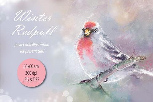 Winter Redpoll -bird illustration