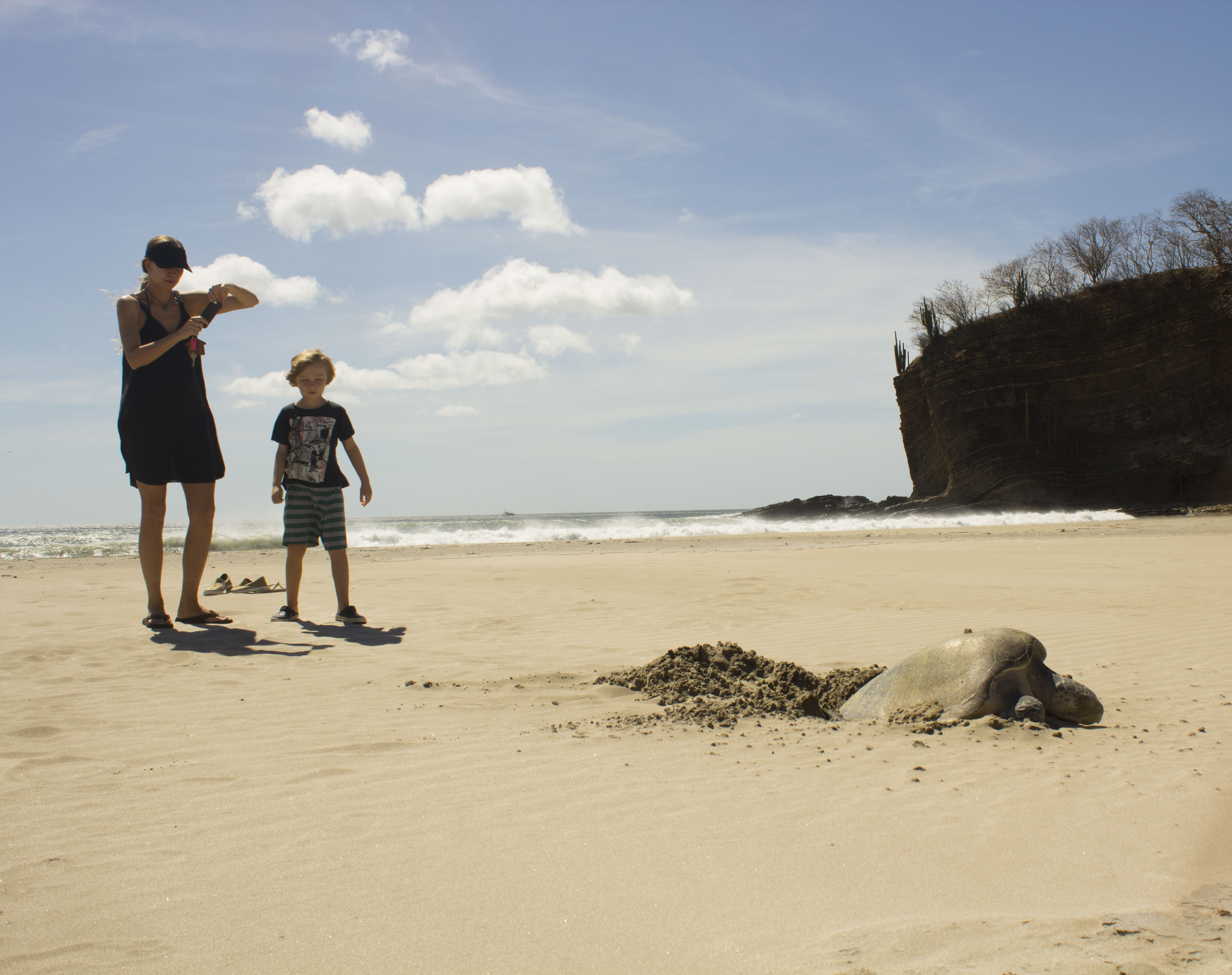 La Veranera Playa Coco turtle