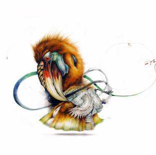 Jesuit Hornbill